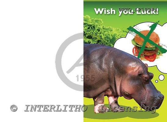 Alfredo, ANIMALS, photos, BRTOLP18984,#a# Humor, lustig, divertido
