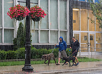 Rick Henderson walks his dog Lola with Caroline Hillier and Gabby  walk past the Federal Building on Christina Street during a heavy downpour of rain.