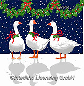 Kate, CHRISTMAS ANIMALS, WEIHNACHTEN TIERE, NAVIDAD ANIMALES, paintings+++++Geese with holly revised,GBKM01,#xa# ,goose,geese,