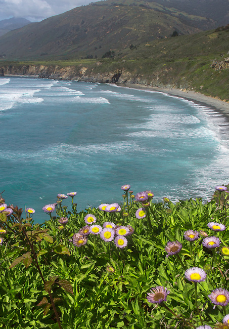 Flowers grow along California's Pacific ocean Coast at Sand Dollar Beach.