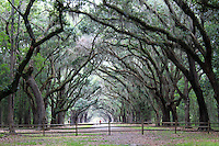 Stock photo: A wooden fence spanning the road lined with oak trees wormsloe plantation in Savannah Georgia USA.