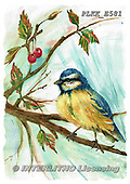 Kris, REALISTIC ANIMALS, REALISTISCHE TIERE, ANIMALES REALISTICOS, paintings+++++,PLKKE581,#a#, EVERYDAY ,birds
