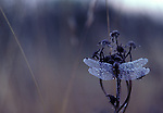 Dragonfly at rest dawn