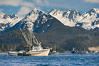 Commercial fishing vessel Lake Bay participates in the first 2006 Sitka Sac Roe Herring fishery opener on the north side of Middle island in Sitka Sound, March 2006.