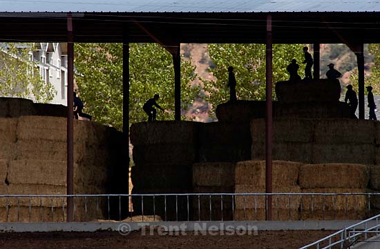 Boys leaping on hay bales, Colorado City<br />