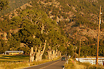 A summer morning, with cottonwood trees along the road to Genoa beneath the Carson Range,.