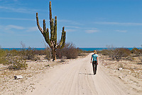Adult female walking along dirt road, Baja California, Mexico