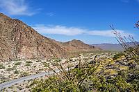 A canyon road leading into Joshua Tree National Park, CA.