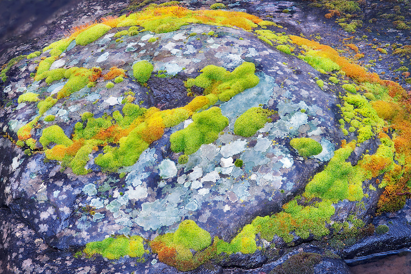 Green and orange moss on streamside rock. Major Creek. Columbia River Gorge National Scenic Area, Washington