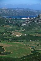 France/2B/Haute Corse/Nebbio/Saint-Florent: le vignoble AOC de Patrimonio et en fond Saint Florent et son golfe