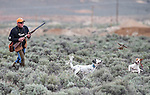 Paul Pradere and his dog Pongo, center, and his doubles partner's dog Red flush a chukar during U.S. Bird Dogs Western State Nationals in Mound House, Nev., on Friday, April 24, 2015. <br /> Photo by Cathleen Allison
