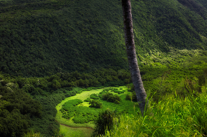 Pololu Valley. The Big Island, Hawaii