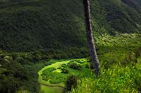 Pololu Valley. The Big Island, Hawaii