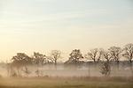 Europa, DEU, Deutschland, Nordrhein Westfalen, NRW, Rheinland, Niederrhein, Weeze, Landschaft, Niersaue, Nebel, Morgenstimmung, , Kategorien und Themen, Natur, Umwelt, Landschaft, Landschaftsfotos, Landschaftsfotografie, Landschaftsfoto, Wetter, Wetterelemente, Wetterlage, Wetterkunde, Witterung, Witterungsbedingungen, Wettererscheinungen, Meteorologie, Wettervorhersage......[Fuer die Nutzung gelten die jeweils gueltigen Allgemeinen Liefer-und Geschaeftsbedingungen. Nutzung nur gegen Verwendungsmeldung und Nachweis. Download der AGB unter http://www.image-box.com oder werden auf Anfrage zugesendet. Freigabe ist vorher erforderlich. Jede Nutzung des Fotos ist honorarpflichtig gemaess derzeit gueltiger MFM Liste - Kontakt, Uwe Schmid-Fotografie, Duisburg, Tel. (+49).2065.677997, archiv@image-box.com, www.image-box.com]