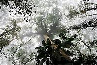 Misty Jungle, Mashpi Cloud Forest in the Choco Rainforest, Ecuador, South America