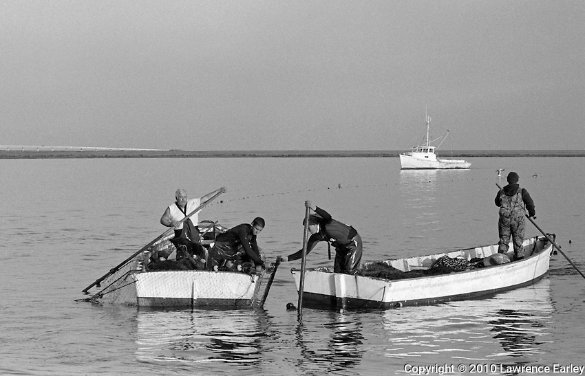 """In Barry Bay, Hugh Styron Jr., Shane Moldenhaur, Luke Salter, and Brandon Gavetti maneuver skiffs in order to attach a staff to the footing stake--also called the """"bunt"""" stake. The runboat MISS BETTIE, dispatched by the Clayton Fulcher Seafood Company in Atlantic, appears in the background."""