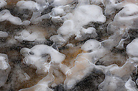 &quot;ICE PUPPIES&quot;<br />