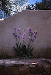 Blooming iris in Santa Fe