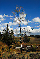 Scenic landscape blue skies white clouds drifting over the Blacktail Plateau in Yellowstone