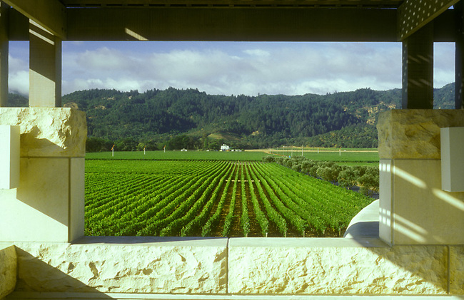 Vineyards of Opus One as seen from the second floor of the winery.