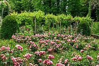 France, Indre-et-Loire (37), Amboise, Jardin et Château du Clos Lucé, le jardin des plantes aromatiques, pergola de vignes et roseraie