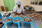 Trabalho em cooperativa dos produtores de Castanha do Para da reserva extrativista Chico Mendes. Xapuri. Acre. 2008. Foto de J.L. Bulcão..