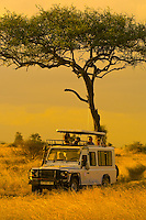 Tourists on safari peer out of the pop up roof of a Mountain Travel Sobek safari vehicle, Serengeti National Park, Tanzania