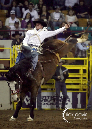 1/19/09--Photo by Rick Davis--PRCA cowboy Bud Munns of Snowville, Utah scores a 77 point bareback bronc ride on the Calgary bronc Honey Sweet during action at the 103rd National Western Stock Show and Rodeo in Denver, Colorado.