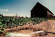 Cuba, March 1992: Irrigation in a Tobacco plantation in Vinales area, Cuba.
