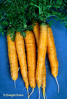 HS12-032b  Carrot - just harvested, Artist variety