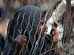 A newly arrived Somali girl watches through a fence at activities inside the reception center of the Dagahaley refugee camp, part of the Dadaab refugee complex in northeastern Kenya.