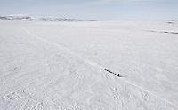 Tuesday March 13, 2012  A team comes down the hill toward Golovin Bay   Iditarod 2012.