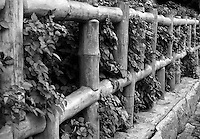 Fine art black and white image of beautiful wooden fence with plants intermixed with the fence.<br />