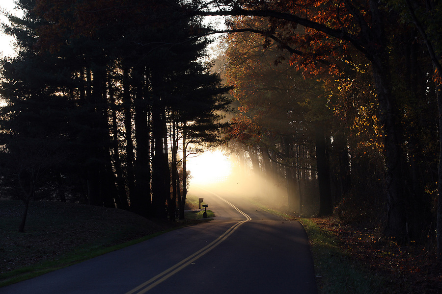 Fog sets through the trees and winding roads in the early morning hours in Albemarle County. Photo/ Andrew Shurtleff