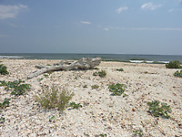 SEA_LOCATION_80369