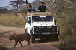 Lion walking past Land Rover