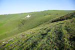 White horse figure carved in chalk scarp slope at Alton Barnes, Wiltshire, England