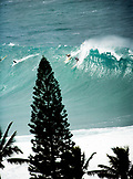 USA, Hawaii, surfers riding a wave with trees in foreground, Waimea Bay