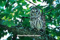 01130-00517 Barred Owl (Strix varia) Ferne Clyffe State Park  Johnson Co.  IL