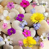 Gisela, FLOWERS, BLUMEN, FLORES, photos+++++,DTGK2080,#f#