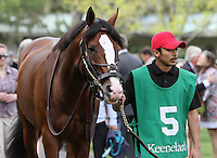 Get Stormy in the paddock before the  Grade 1 Maker's 46 Mile at Keeneland Racecourse.  April 13, 2012.