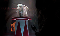 Dumbo (2019) <br /> *Filmstill - Editorial Use Only*<br /> CAP/RFS<br /> Image supplied by Capital Pictures