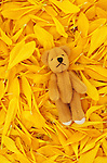 Beige teddy bear with contented face lying in bed of yellow Chrysanthemum petals