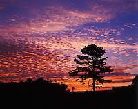 Single tree silhouetted at sunrise, Cumberland Gap National Historic Park, Kentucky.