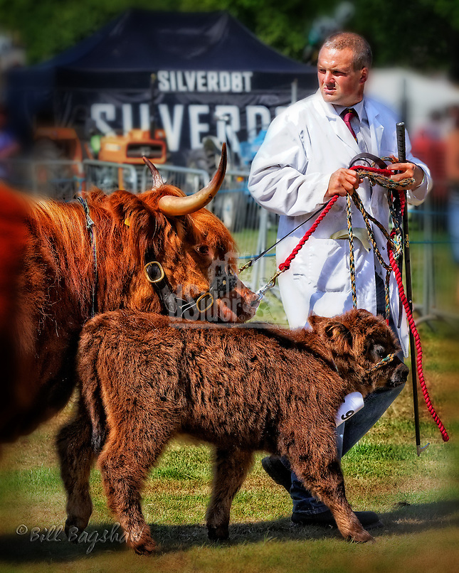 Highland cattle at Banchory show dsider.co.uk online magazine, photo courses