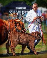 Highland cattle at Banchory show dsider.co.uk online magazine, photo courses
