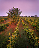 AUSTRIA, Oggau, a full moon sets over a vineyard to the South of Oggau, Burgenland