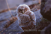 Carl, ANIMALS, wildlife, photos(SWLA2135,#A#)
