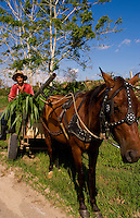 Farmer in red shirt and straw hat riding horse carriage with crops in Havana Cuba in country near Habana