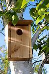 Birdhouse in a birch tree